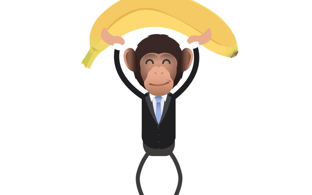 Was indonesische Affen mit Erfolg zu tun haben