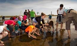 Wattwanderung Westerhever Kinder spielen Leuchtturm Wattenmeer