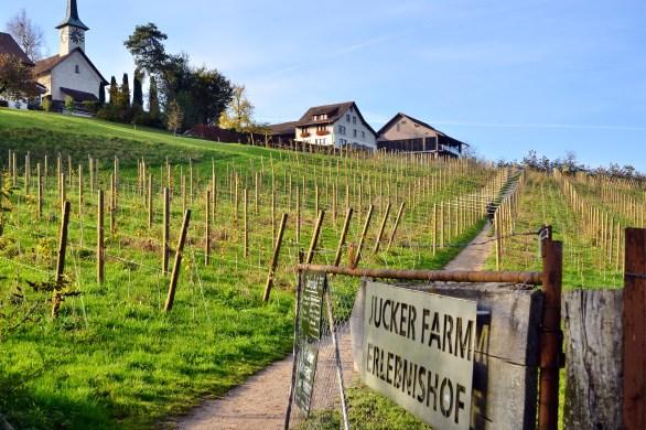 seegraben_-_jucker_farm_juckerhof_2014-10-31_15-26-02