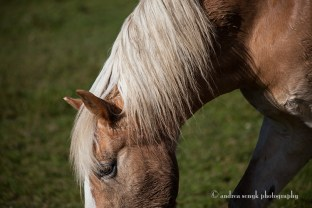 Country Horse 3