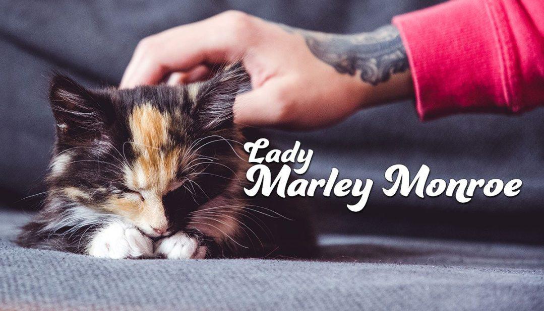 Kitten Lady Marley Monroe