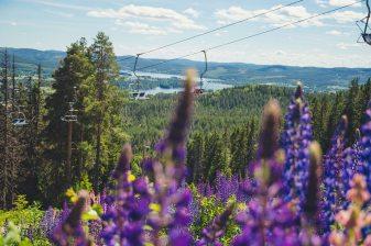 Nature_AndreasFransson2