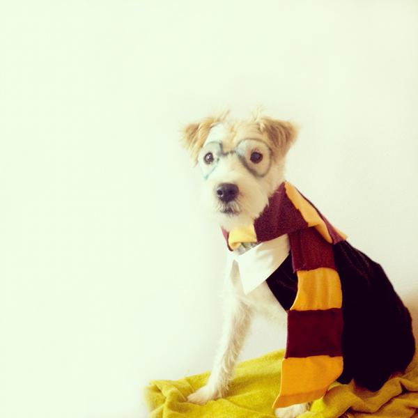 Harry Potter dog costume
