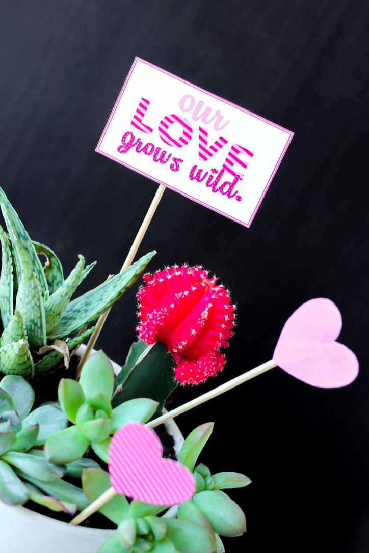 """""""our love grows wild"""" sign in potted plant"""