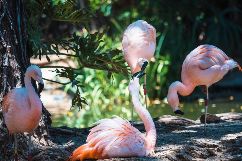 four pink flamingos with greenery in background