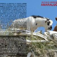 AMARALUCANIA_IL FILM