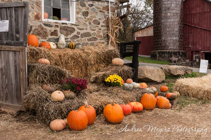 Wegmeyer Farms pumpkins at the stone barn - Andrea Meyers