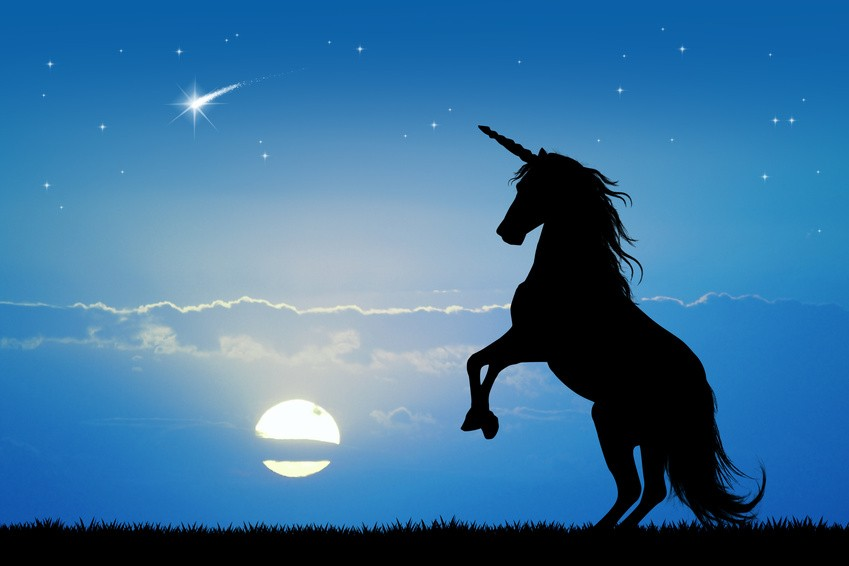 Dear CEOs, Are You Happy Not Being a Blue Unicorn?
