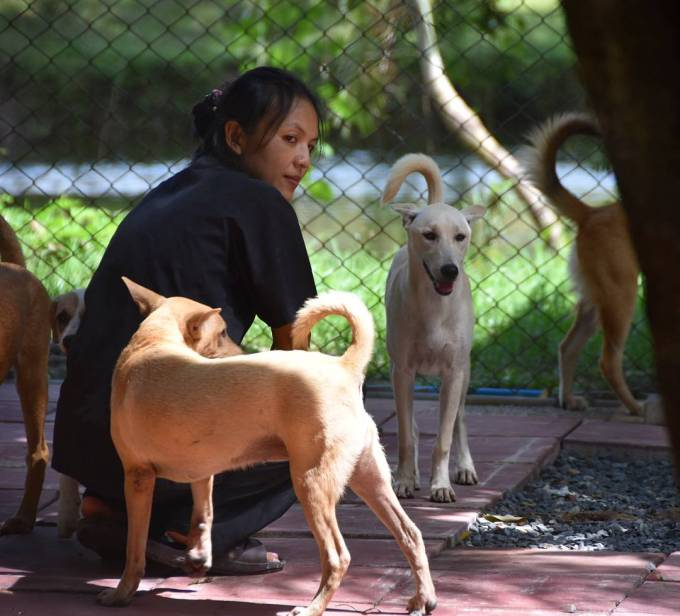 Soi Dog Foundation Phuket Thailand