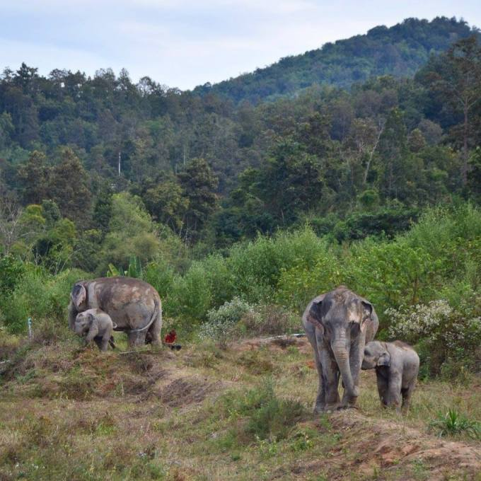 Chiang Mai, Thailand, elephant sanctuary, travel