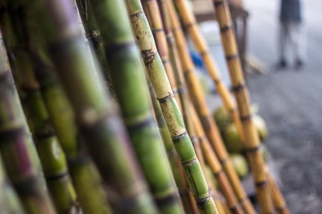 Sweet, sweet, sweet sugar cane
