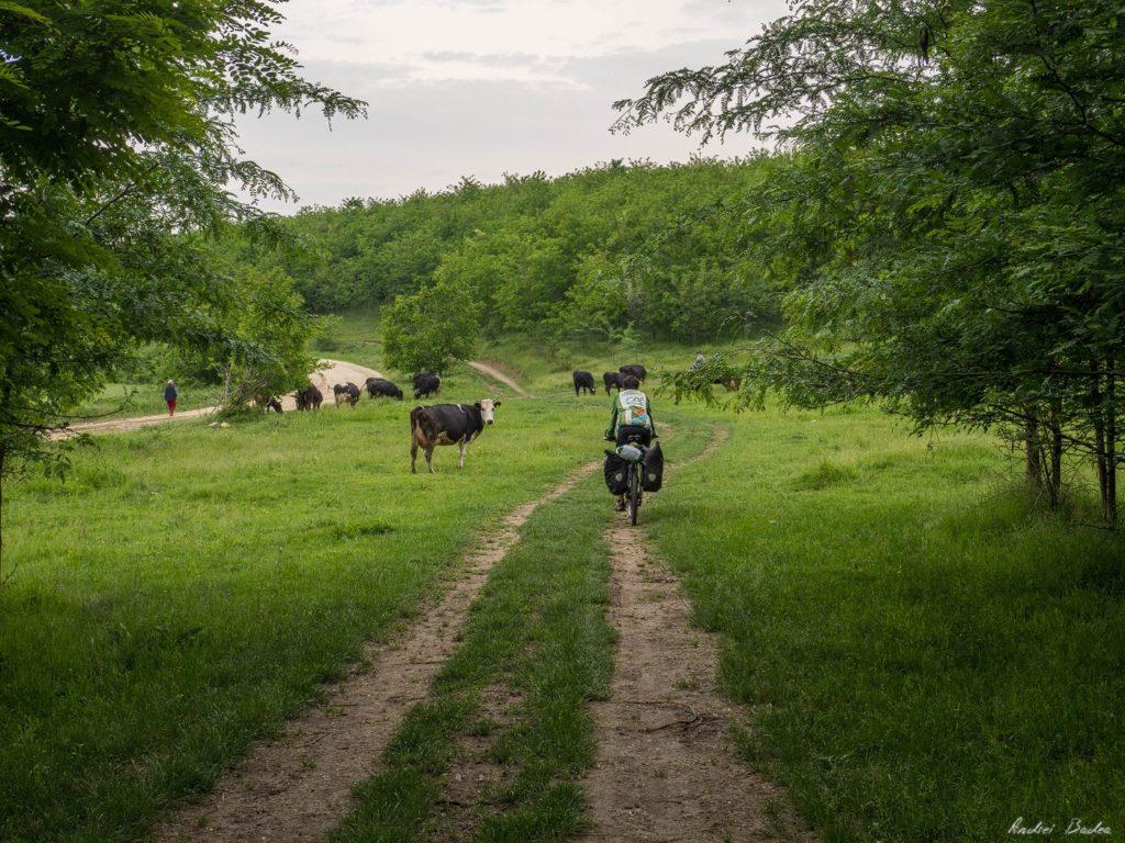 47 - Istorie și maci în Dobrogea, spre Adamclisi