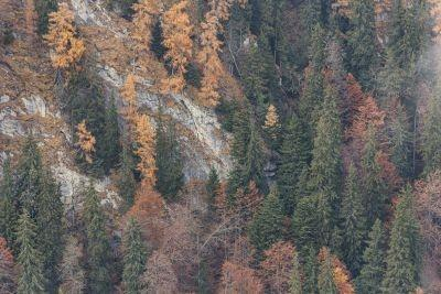 Mălăieștii de toamnă. Munții Bucegi