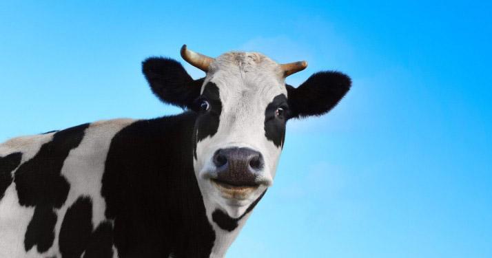 Photo of 2 femei așteptau cireada de vaci