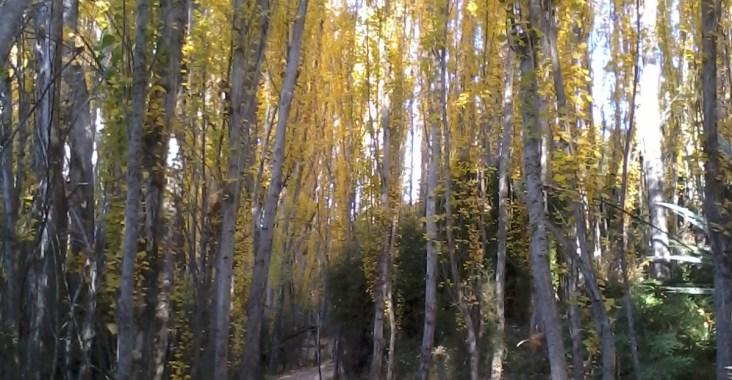 Bosco Nuova Zelanda in autunno