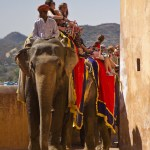 <b>Jaipur - the Amber fort</b>