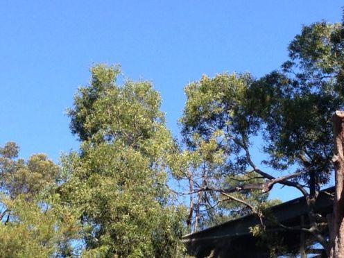 Melbourne 2014 - 086