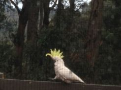 Melbourne 2014 - 268