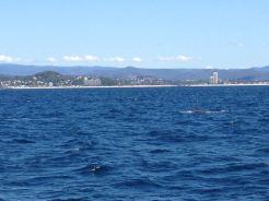 Gold Coast 2015 - 474 of 608