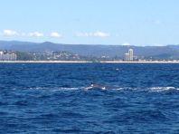 Gold Coast 2015 - 478 of 608