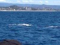 Gold Coast 2015 - 492 of 608