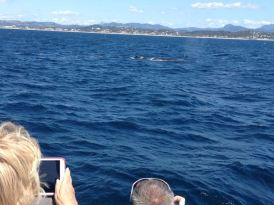 Gold Coast 2015 - 528 of 608