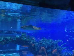 Under the Sea - 2