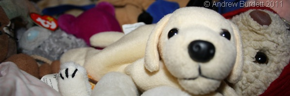 MAN'S BEST FRIEND?_This dog, presumably a free toy with a bag of loo-rolls, probably doesn't even have a name. It's for the chop (the charity shop).
