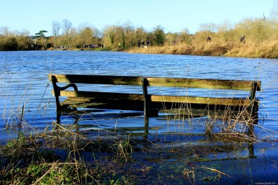 Only those with wellington boots may wish to sit on this bench, due to the high water level.