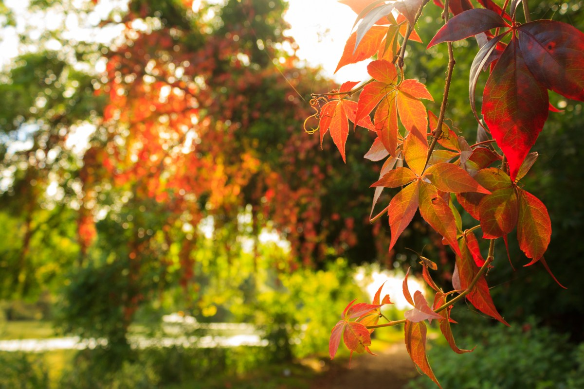This balmy, final weekend of September was painted in an autumnal colour-scheme.