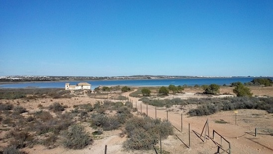 View from the observation tower (western bank of Salina de La Mata)