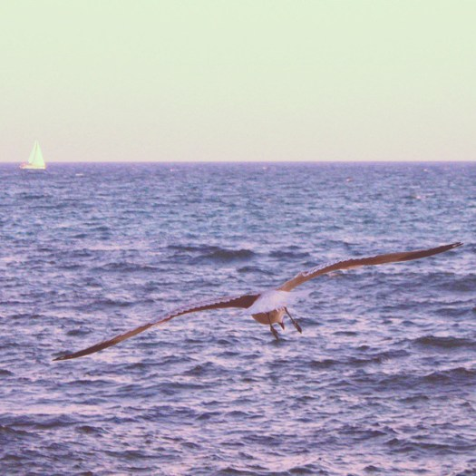 A seagull flying over the Mediterranean sea, #Spain #España