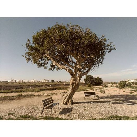 Nice area to rest near Zenia Boulevard Shopping Center