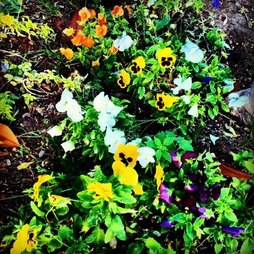 Random Flowers Mix. June, 29, 2014