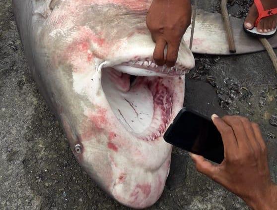 Baby Shark Do Do Do…NOT!!!
