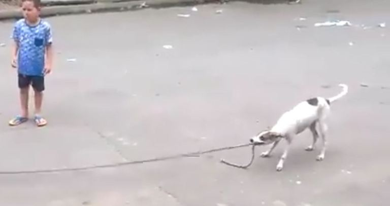 Best of Brazil: Can Your Dog do This?