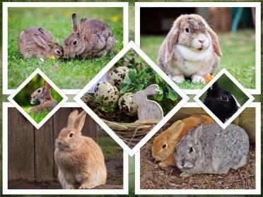 rabbit-2133898_1280.jpg