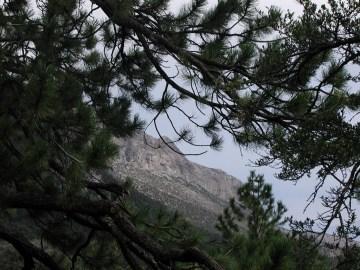 Mount Charleston 19