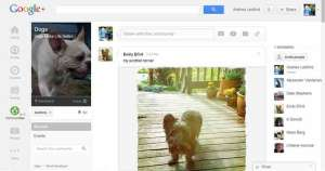 "My ""Dogs"" Group on Google Communities"