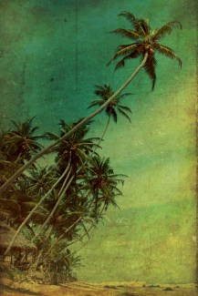 http://fineartamerica.com/featured/tropical-vestige-andrew-paranavitana.html
