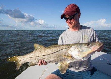 Sanibel Snook