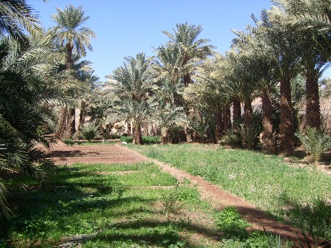 gardens-at-hammadis-house-in-zagora1