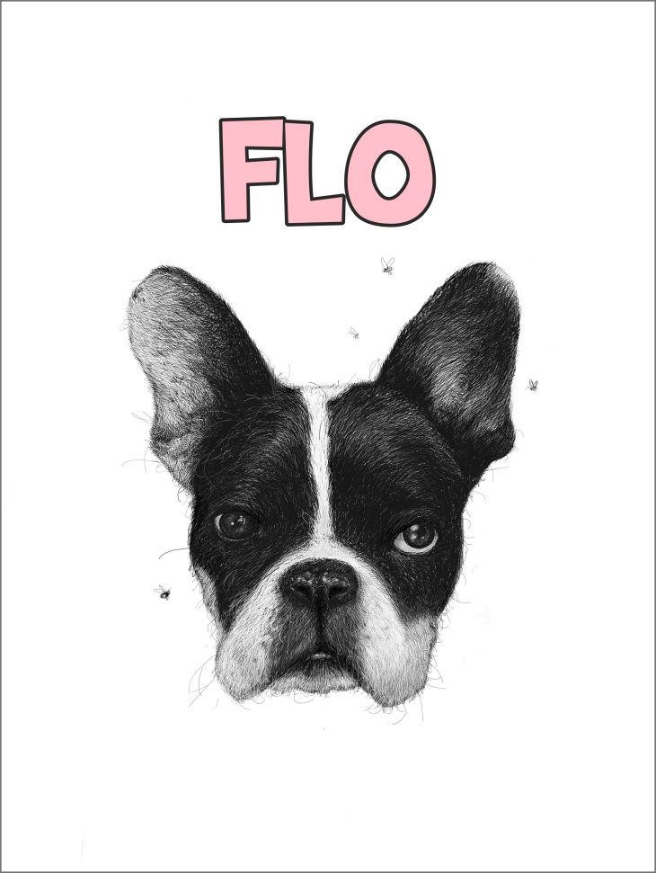 Pencil drawing portrait of a French bulldog called flo with flies buzzing around