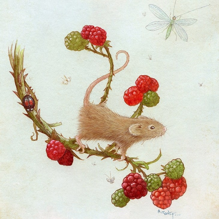 Coloured drawing of a mouse perched on a blackberry branch with a dragon fly