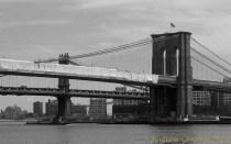 NYCBW 2888