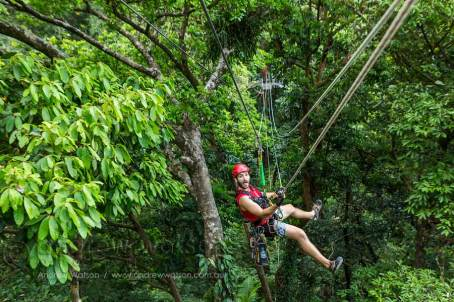 Guide ziplining between platforms on rainforest canopy ropes