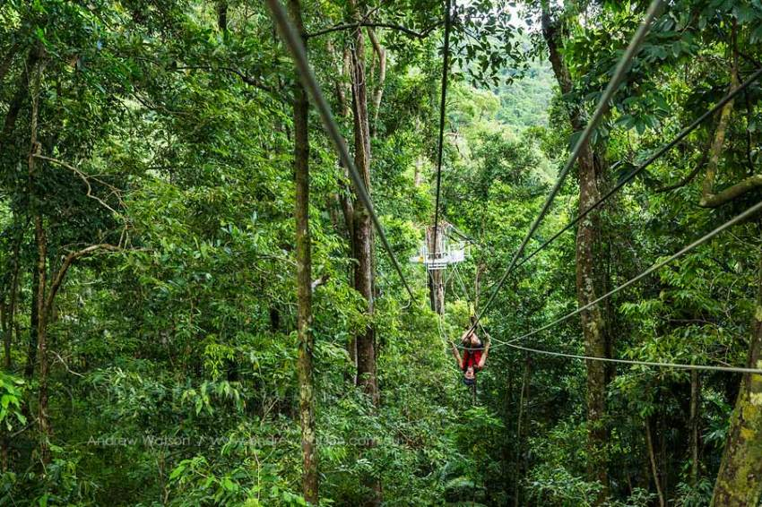 Guide zip-lining between platforms on rainforest canopy ropes