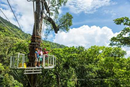 Guide and family looking out over rainforest from canopy platform