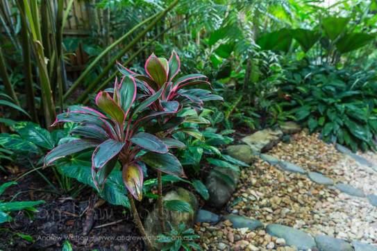 Image of residential tropical garden in Port Douglas