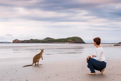 Image of tourist and wallaby on the beach at Cape Hillsborough National Park